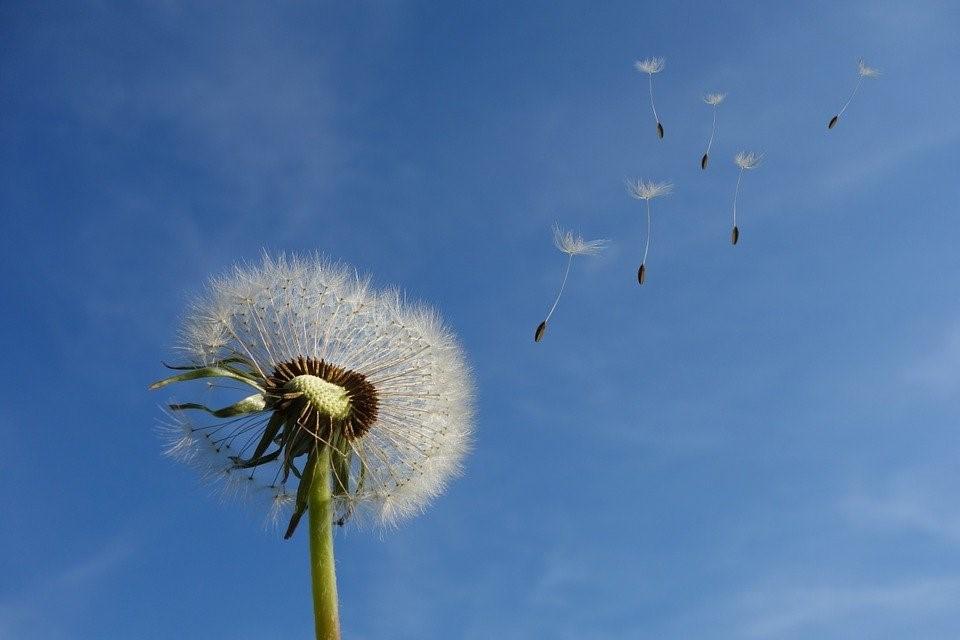 アーユルヴェーダでのヴェータ空と風など