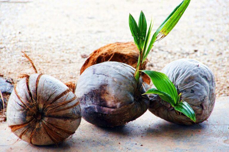 幅広く使える!ココナッツオイルのヴィーガンレシピ7選