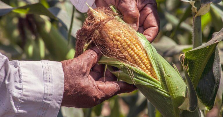 【徹底解説】健康のために知っておきたい「遺伝子組み換え(GMO)」