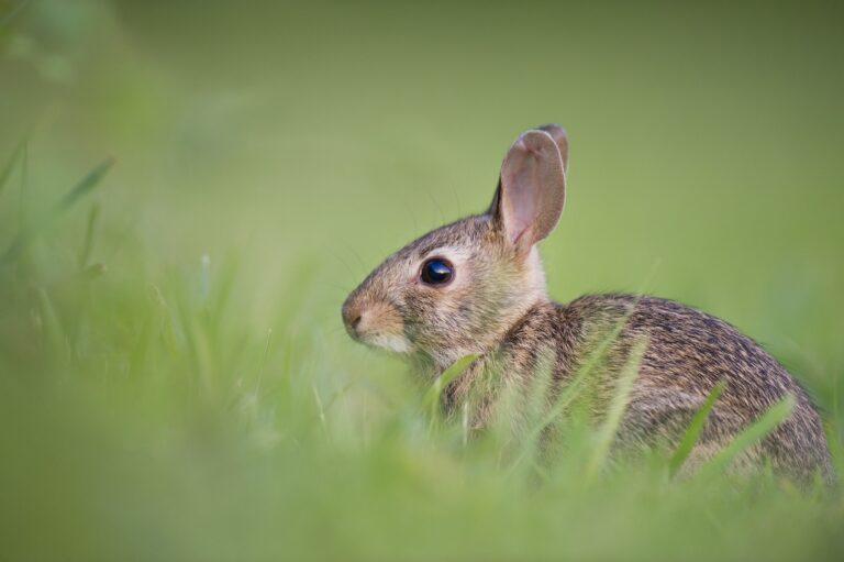 【クルエルティーフリー】ハワイ州が全米で6州目の化粧品の動物実験禁止州に