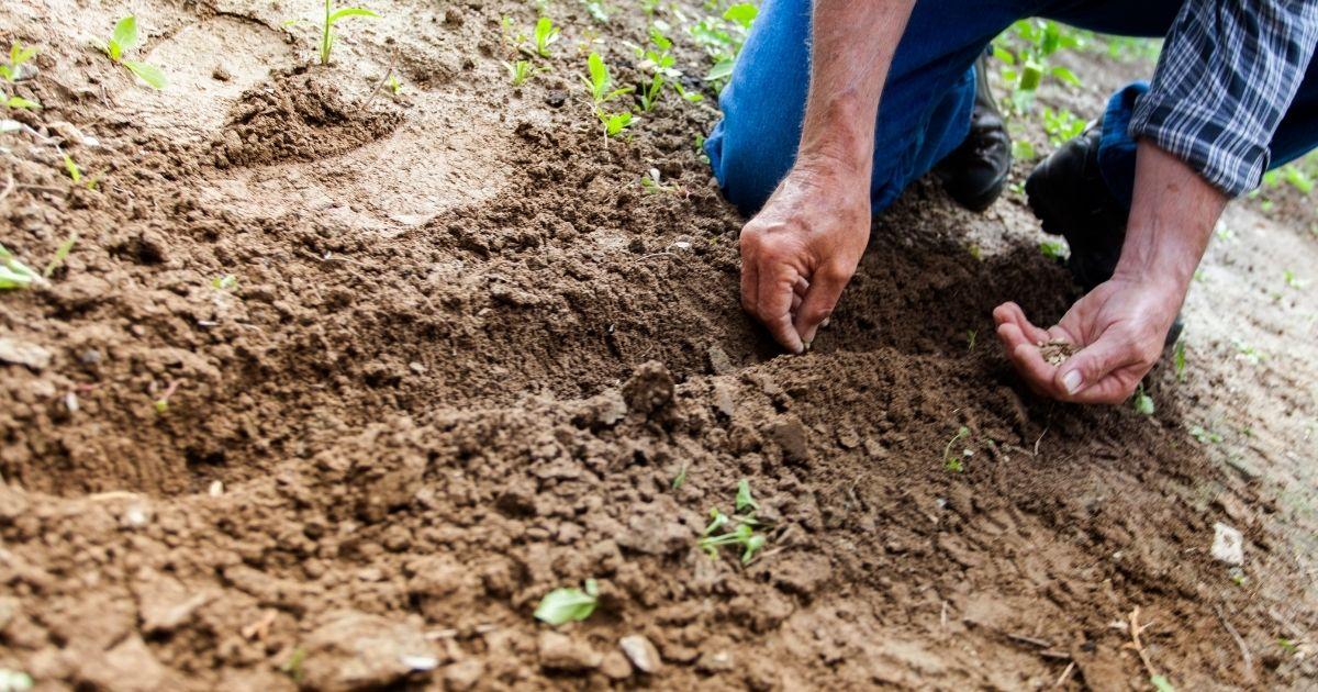 Ecosia(エコシア)の実施する樹林プロジェクトとは?
